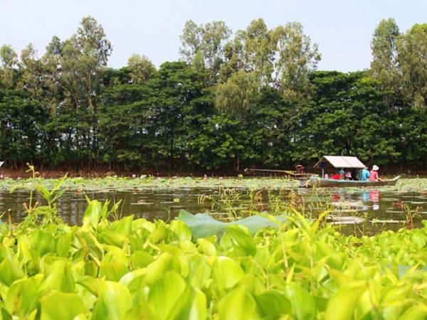Tháng 9-11, búng Bình Thiên nhuộm sắc vàng của bông điên điển, bông nhút, sắc hồng của hoa sen.