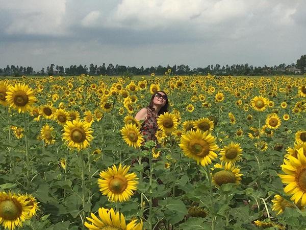 cánh đồng hoa hướng dương ở Thái Bình