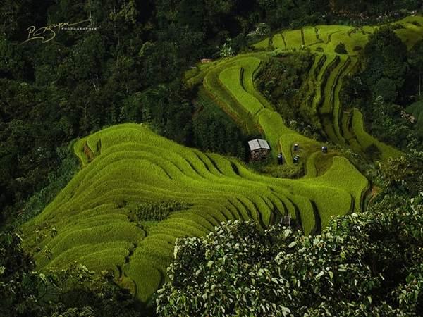 Những ruộng bậc thang ở hoàng su phì , Hà Giang.