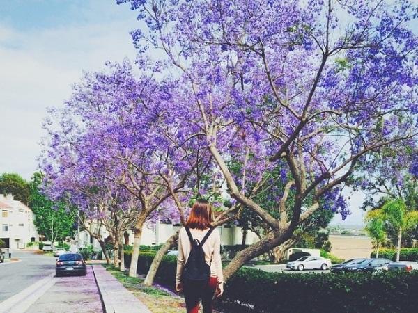 Du lịch Đà Lạt tự túc vào mùa hè