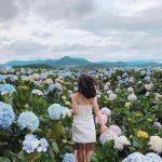 Ngắm những đồng hoa tháng 10 đẹp nức lòng người