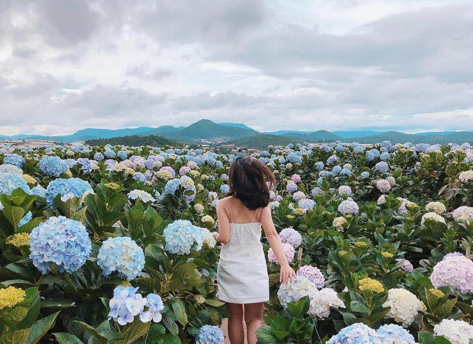 Đồng hoa tháng 10: cẩm tú cầu