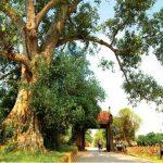 Ngắm khung cảnh yên bình của làng cổ Đường Lâm