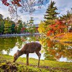 Tín đồ du lịch đừng bỏ lỡ những điểm đến mùa thu tuyệt vời này