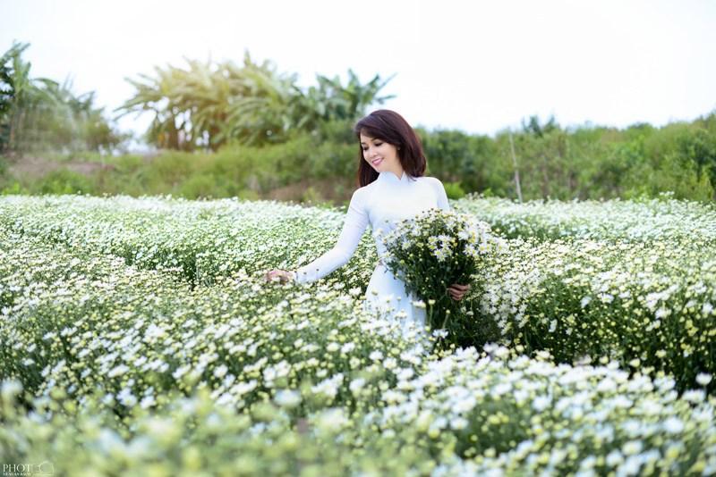 Đồng hoa tháng 10: cúc họa mi (Hà Nội)
