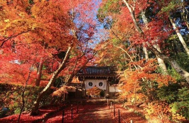 Đền Komyoji, Kyoto – Nhật Bản