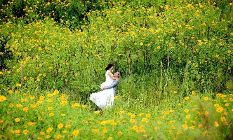 Đồng hoa tháng 10: dã quỳ (Đà Lạt, Lâm Đồng)