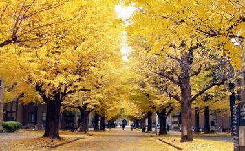 Kinh nghiệm du lịch Tokyo giá rẻ vào mùa thu