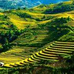 Ruộng bậc thang ở Mù Cang Chải - Yên Bái
