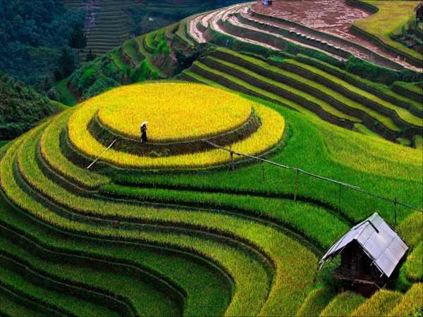 Ruộng bậc thang ở Việt Nam