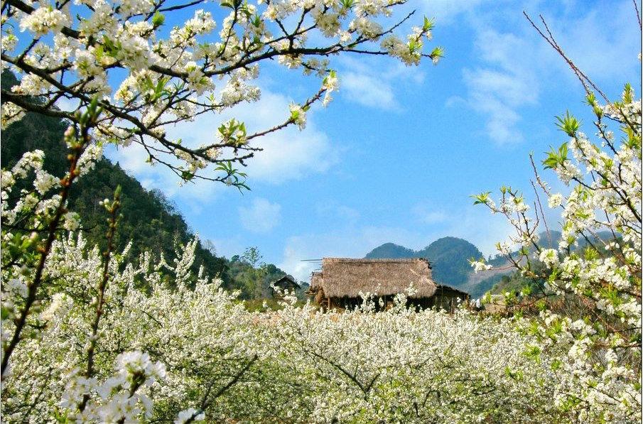 Du lịch Mộc Châu có gì cuối năm cũ, đầu năm mới?