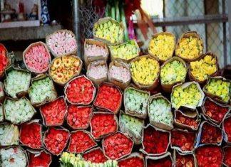 Tham quan chợ hoa Hồ Thị Kỷ giữa lòng Sài Gòn