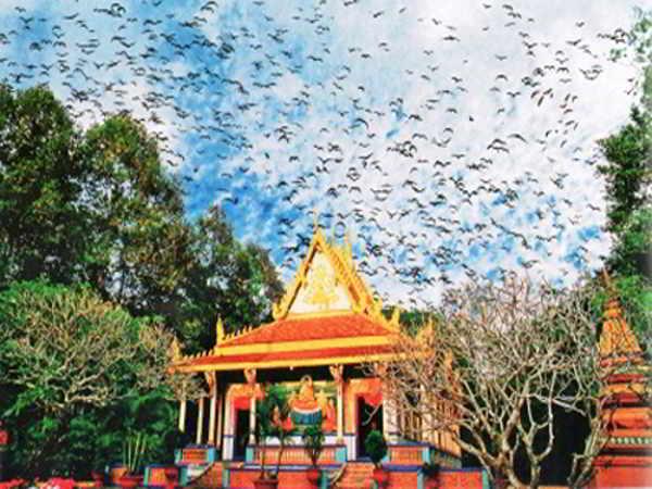 Khám phá kiến trúc kì lạ và loài dơi bí ẩn ở chùa Dơi Sóc Trăng