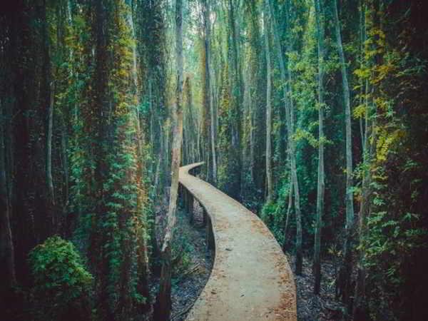 Làng nổi Tân Lập - Vẻ đẹp hấp dẫn của thiên nhiên