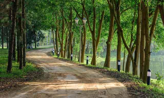 Tham quan con đường tuyệt đẹp tại Flamingo Đại Lải Resort