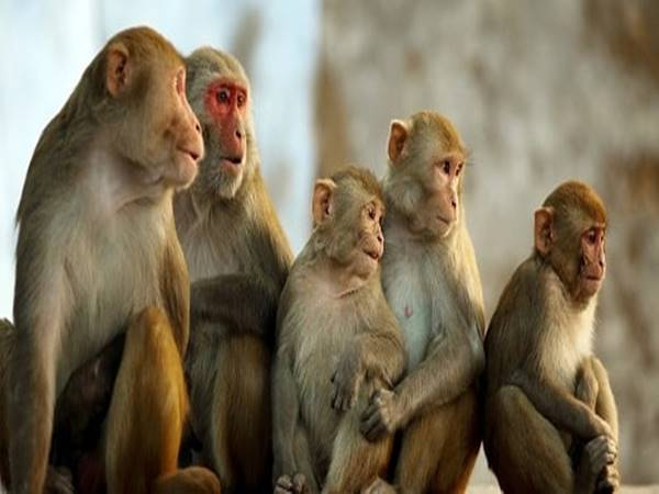 Mơ thấy khỉ điềm báo cho bạn điều gì?