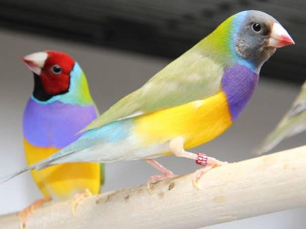 Mơ thấy chim đánh lô đề con gì dễ trúng